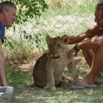martin clunes lion called mugieFEAT